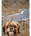 Im a groomer how takes pictures of the dogs I do, and I also love to travel, so both pics are...