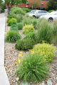 EJ415 Gardens in public places.  Landscaping around the perimeter of a parking lot on 17th Ave. in...