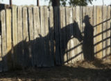 Michael Moon's shadow is cast on a fence on the Hanna Ranch after a cattle round up Monday October...