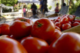 Freshly picked ripe tomatoes from the Platteville, Colo.,  farm of Regan and Randy Waddle (cq) are...