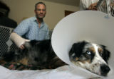 Mark Castrodale, 40, of Thornton was attacked by a pair of pitbulls while walking his dog Tucker,...