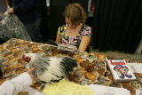 Amber Fulenwider, 11, (cq) of Denver reads a comic book while watching a brahma rooster at the...