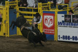 Jimmy Anderson (cq) rides during the Denver Chute-Out bull riding competition at the Denver...