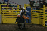 Cory Melton (cq) rides during the Denver Chute-Out bull riding competition at the Denver Coliseum...