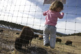DM0567   BISON+51543  Kyra Cairns, 1 1/2, of Denver climbs up the fence to get a better view of a...