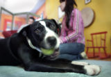 Hank, a pit bull plays with a ball and must stay in hiding. Jen, (who asked that her last name not...