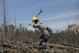 A member of a 38 man crew, plants seedlings along Nine J Road, Tuesday Morning, April 8, 2008,...