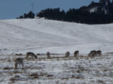 Antelope graze below the home belonging to Jeff Hawn