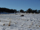 Two Bison killed on property belonging to Kathy Pimm.
