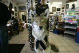 0035 A stuffed coyote named Harley, stands watch n the silver heel truck stop in Fairplay Colo.,...