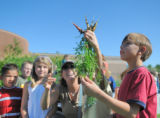 Bear Creek K8 second grader, Ty Banks, admires baby carrots just pulled from the ground of the...