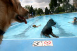 (379) People bring their dogs to swim at Berkeley Park Pool for the annual DogaPOOLooza event on...