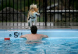 (474) Dan Bush tries to coax Jack, a Husky-Chow mix, into the pool at the annual DogaPOOLooza...