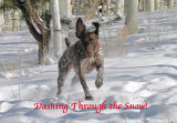 This is Pepper, our German-shorthaired Pointer, running through the snow  in South Park.  Jill...