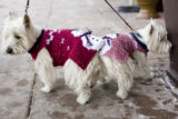 Dog owner, Dr. Kevin Luevas, brings his dogs Luci, in red sweater, and Maggy, in pink sweater,...