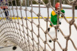 (Nederland, Colorado, Jan. 31, 2009) Kids with the Nederland Green Ghosts play and practice ice...