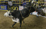 TZ Ranch bull 'Diez' dumps out J.C. Navarro of NC during the National Western Stock Show...