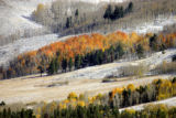 A light dusting of snow covers the ground near Silverthorne as aspen, still in full fall color,...