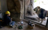 [Denver, CO   6/11/04]  Randy Chavez, a sound effects technician for the Denver Zoo, has an...
