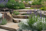 Penstemon, columbine, and low-growing (xeriscape?)perennials flank meandering flagstone stairs at...