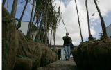 Eric Hessler,  a Denver Parks employee unloads trees with volunteers from  The Park's People's...