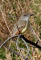 Attached is a photo of the bird  I found at Crow Valley Campground on the Pawnee National...