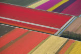 PDJ101 - An aerial view showing farmers seen as small dots in a yellow patch in tulip fields in...