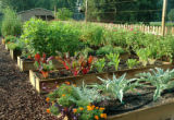 SH08E024DIYGARDENER May 5, 2008 -- A home vegetable garden is easy to start and doesn't require as...