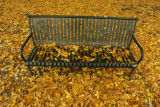 Fallen leaves rest on a park bench Wednesday afternoon October 19, 2005 in City Park. The rain and...