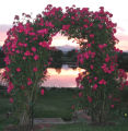 A rose arbor frames a view of an 11-acre lake behind the Lafayettehome of Carl and Shirley...