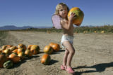 "Taylor MacDonald,2 from Highlands Ranch, gathers pumpkins at the ""Great Pumpkin patch at Rock..."