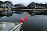 A plastic flamingo sits on the bow of a boat at Frisco Bay Marina Tuesday morning November 8, 2005...