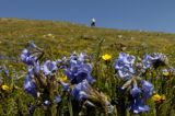 The high altitude wildflower viewing on the top of the Continental Divide was just perfect Monday...