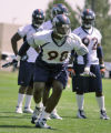 Broncos DE Courtney Brown #98 runs a defensive rush drill as the Denver  Broncos work out during...