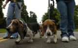 Ashley Karros (cq) walks with her dog Lucy Lou as friend Jennifer Johantgen (cq), left to right, ...