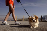 "Katie Penn, 13, Fort Worth, Texas, walks her chihuahua ""Buster"" at the top of..."