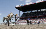 ***Caption Update*** Saddle Bronc rider Cody Taton, Rapid City South Dakota, is thrown from the...