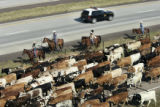 A Wyoming State Police car drives passed on I-25 as nearly 700 head of Corriente long horned...