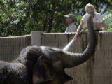 Denver Zoo Keeper, Chris Bobko, right, gets a little extra affection from Dolly as she is sprayed...