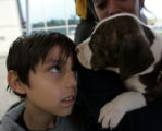 Devon Rosas, 8, of Aurora, keeps an eye on Chomper, an 8-week-old male pit bull his mother,...