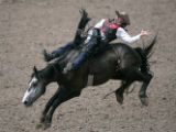 Timothy Wilkinson, of Fort Scott, KS., holds on during the saddle bronc competition at the...