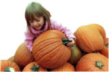 Rebecca Hansen, 5, searches for the perfect pumpkin at Glasier Farms in Aurora.  The season's wet...