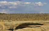 Burnt trees on a mesa above the Hemenway House site in Mesa Verde National Park serve as a...