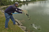 Craig Barr (cq), Colorado Division of Wildlife, dumps 1500 trout into City Lake Park Wednesday...