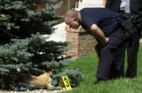 (DENVER, Colo., July 13, 2004)  A police investigator looks at the body of a dog that was shot...