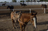 CHEYENNE, Wyoming, July 22,, 2004) Sunrise on the track as the riders prepare for a 7am start. ...