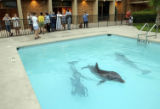 (NYT47) GULFPORT, Miss. -- Aug. 28, 2005  KATRINA-12 -- A trio of Atlantic bottlenose dolphins...