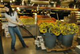 Denver, CO Sept. 12, 2005 Andra (cq) Denton pulls a load of Colorado grown sunflowers into the...