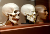 Denver, Colo., photo taken March 8, 2005- Multiple solid replicas of the skin and bone of a...