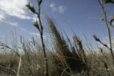 (HUGO, Colo., March 10, 2005) - Native grasses grow to a natural state on an expansive 11,000 acre...
